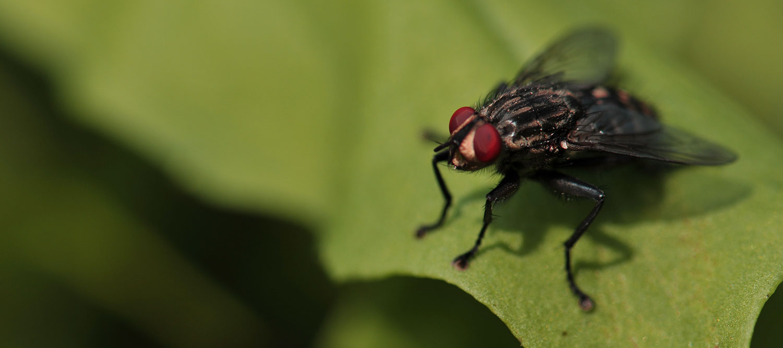 Dorset's number 1 pest control service