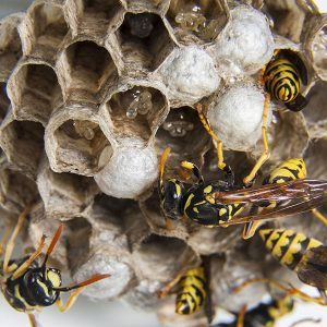 Wasp removal Poole